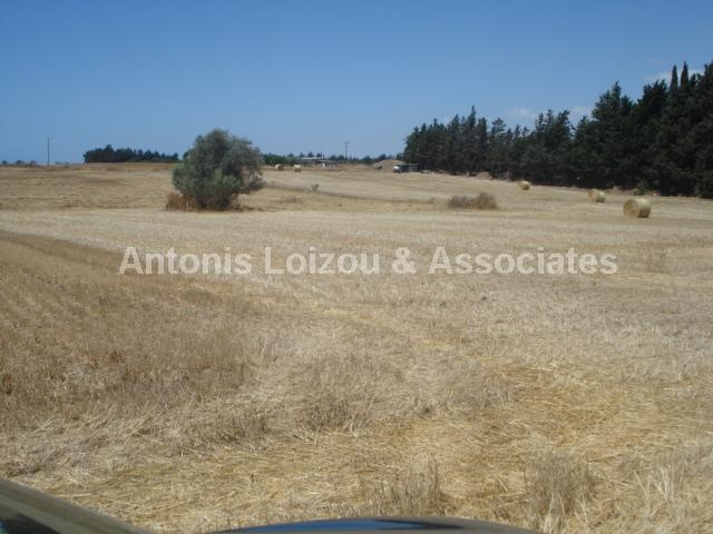 Field in Larnaca (Meneou) for sale