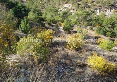 Land in Paphos (Agia Marina Kelokedara) for sale