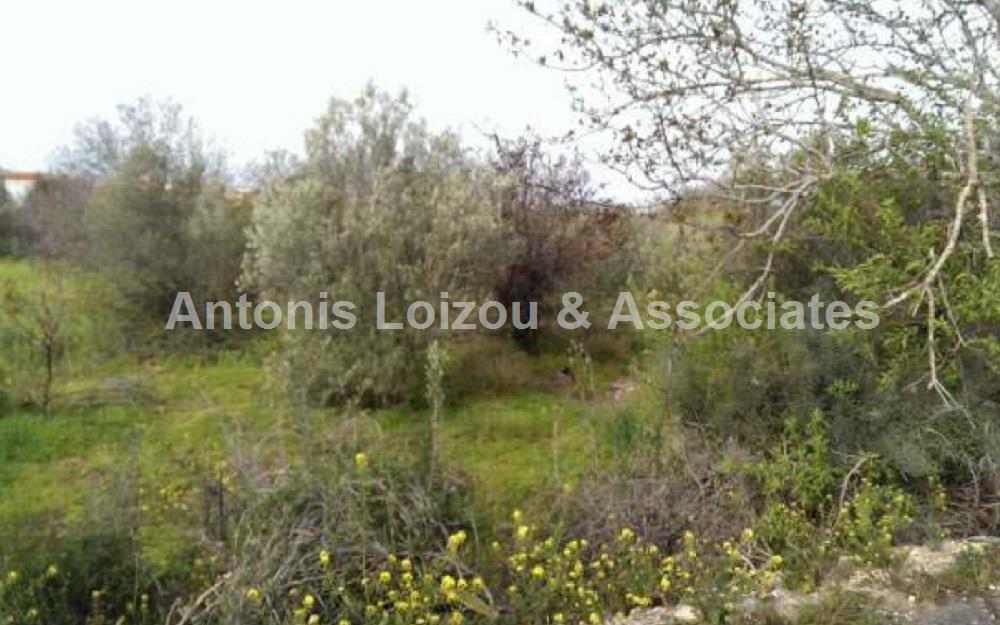Field in Paphos (Kissonerga) for sale