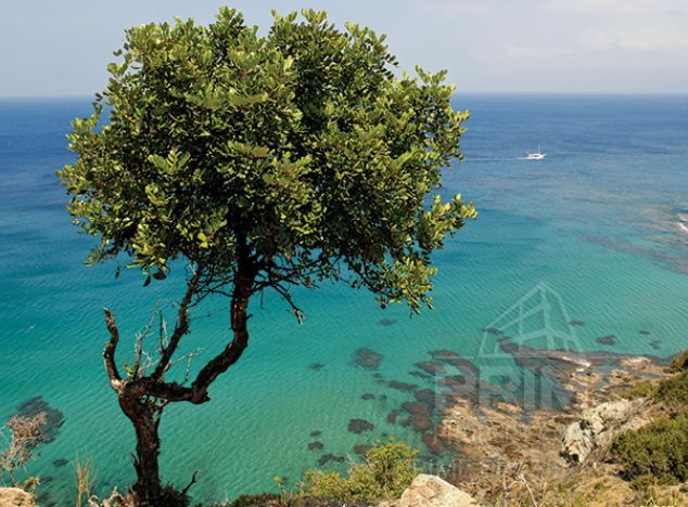 Land in Paphos (Pegeia) for sale