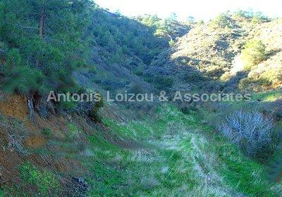 Field in Paphos (Pomos) for sale